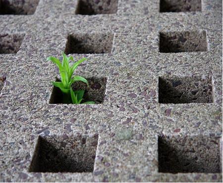Πηγή: http://commons.wikimedia.org/wiki/File:Plant_growing_through_hole_in_cement.jpg
